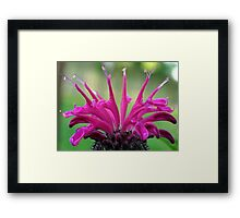 Floral Crown (Bee Balm) Framed Print