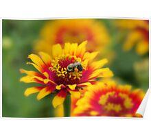 Great Pollen Poster