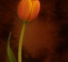 Tulip by AnnieD