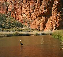 Pacific Heron, Glen Helen Gorge by Blue Gum Pictures