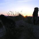 dugs in the dunes  by joak