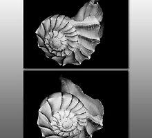 She sells seashells . . . by Bonnie T.  Barry