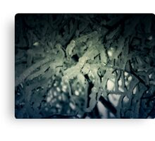 Winter trees 3 Canvas Print