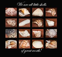 Little Shells of Great Worth . . . by Bonnie T.  Barry