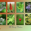 All Things Nature by Kimberly Palmer