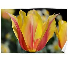 Flame Tulips Poster