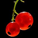 Red Currants by Frank Yuwono