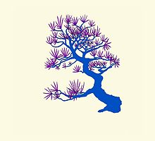 Blue Pine Bonsai (Cream Background) by sprucetree