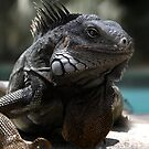 Iguana 3 by Yaroslav  Williams