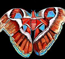 Spiral Butterfly III by Shira Chai