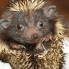 Hedgehog with Big Ears by Richard Heeks