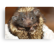 Hedgehog with Big Ears Canvas Print