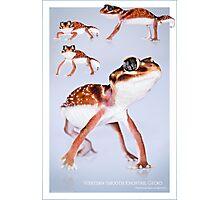 Western Smooth Knobtail Gecko [Nephrurus levis occidentalis] Photographic Print