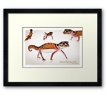 Smooth Knobtail Gecko [Nephrurus levis levis] Framed Print