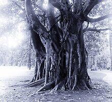 Giger's Tree by randmphotos