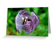 Fairy ina Flower Greeting Card