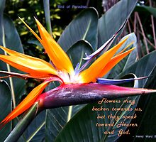 Bird of Paradise by LeftHandPrints