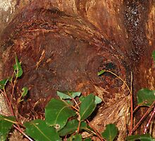 Trunk Of An Ancient Red Tingle Tree by Pam Wilkie