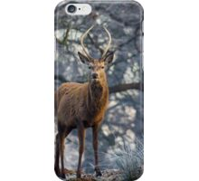 Young stag in winter iPhone Case/Skin