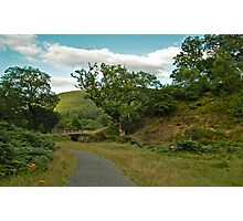 Powerscourt park Photographic Print