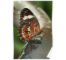 Orange Lacewing Butterfly Poster