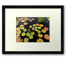 Autumn Water Lily Framed Print