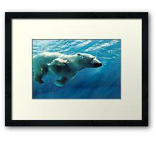 Snowflake Polar Bear - Spring Swim Framed Print