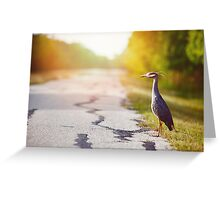 Night Heron Waiting for His Ride Greeting Card