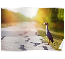 Night Heron Waiting for His Ride Poster
