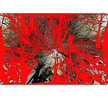 Sleepy Hollow Horror (2nd in Series) Photographic Print