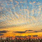 Harvest Sunset by Kenneth Keifer