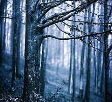 Scary forest at night by naturalis