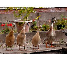 mother goose and family Photographic Print