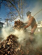Old farmer burning dead leaves by naturalis