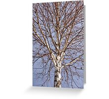 Birch tree against blue sky Greeting Card