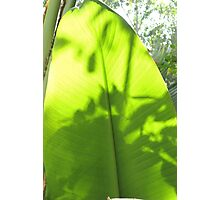 GREENLEAF WITH SHADOWS Photographic Print
