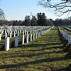 Arlington National Cemetery  by bradleyduncan