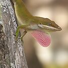 ANOLE ~ Showing Off by Penny Odom