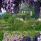 ITALY: Verona 003 by middletone