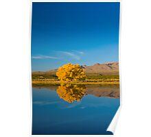 New Mexico. Socorro. Bosque de Apache National Wildlife Refuge. Poster