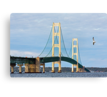 Mac and Seagull Canvas Print
