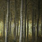 Woodland by Alice Fisher