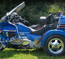 blue goldwing by zacco