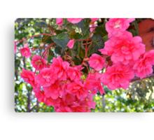 Begonia Enchantment Canvas Print