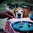 """""""You Going To Eat That?"""" by Susan Bergstrom"""