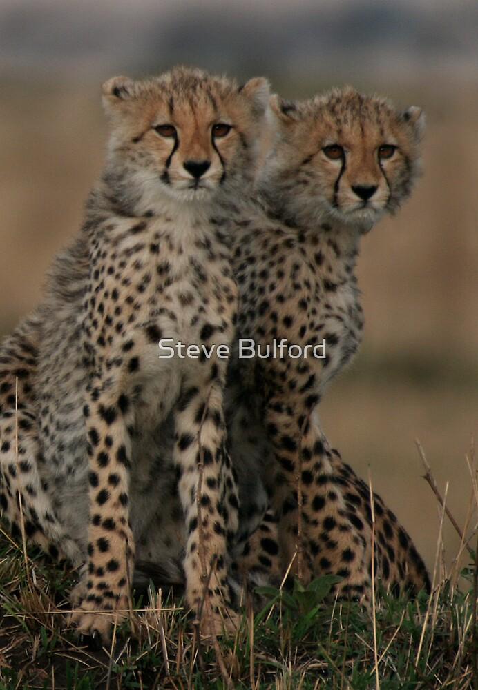 Cheetah Brothers    by Steve Bulford