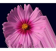 Cosmos Photographic Print