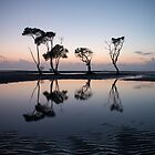 My Dancing Trees _ Beachmere by Barbara Burkhardt