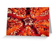 Magnificent Fire Urchin, Wakatobi National Park, Indonesia Greeting Card