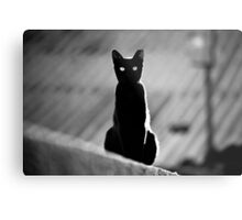place in the sun for a black cat Metal Print